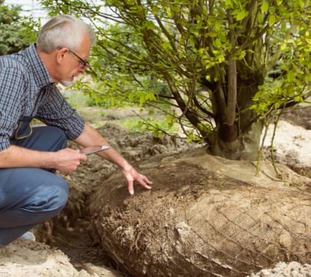 Planting and Transplanting tree